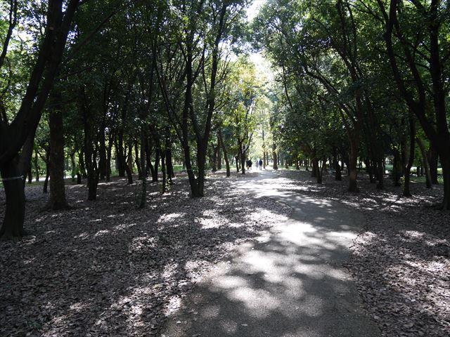 大阪城公園の木の小路