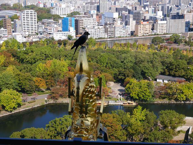 大阪城天守閣の展望台から見た眺め、金のしゃちほこ