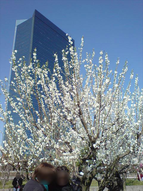 大阪城公園「桃園」の桃の様子