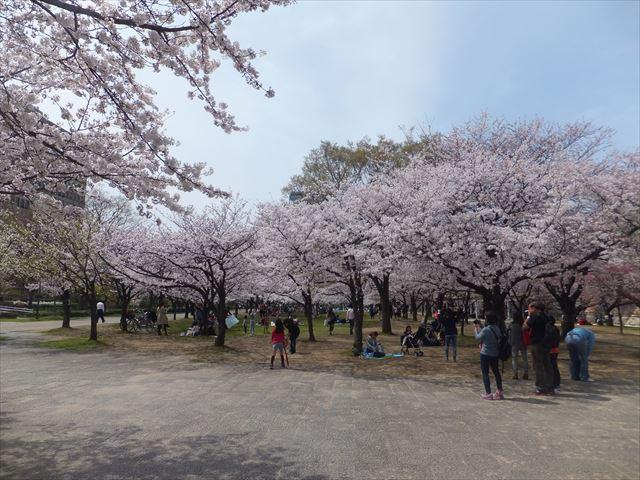 大坂城公園、南外堀付近の桜