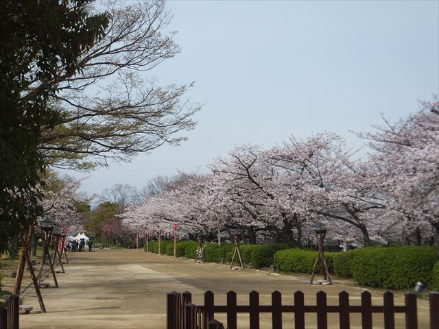 大阪城西ノ丸庭園の桜