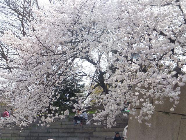 大阪城太鼓櫓跡の桜