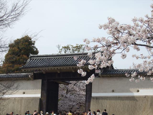 大阪城桜門周辺の桜