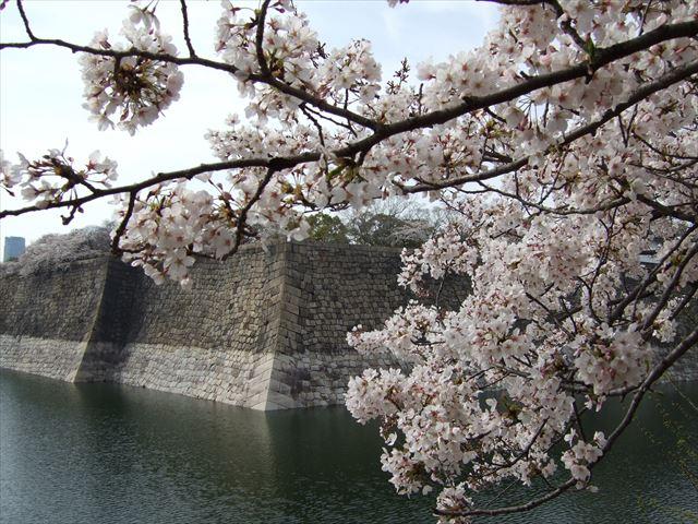 大阪城公園、城南バス駐車場周辺の桜