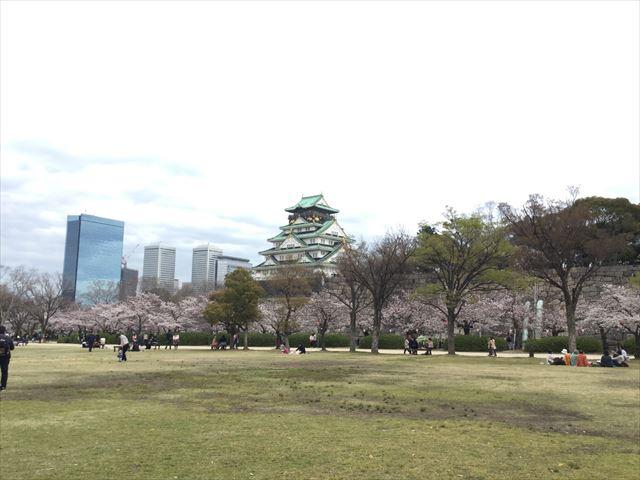 西の丸庭園の桜と大阪城天守閣