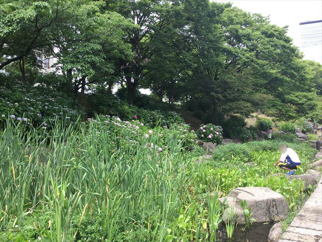 大阪城公園「あじさい園」と池