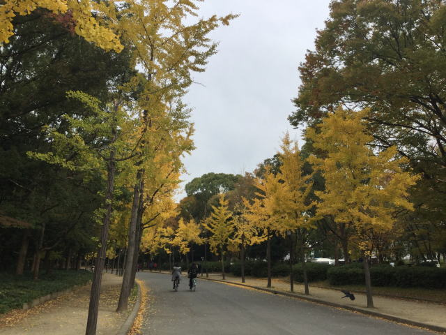 大阪城公園、森ノ宮駅噴水横の道